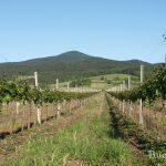 Weingärten im Frühjahr ein Erlebnis