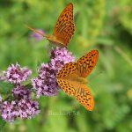 Sooßer Artenvielfalt der Natur beobachten
