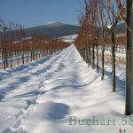 Weingarten im Winter in Ruhe geniessen